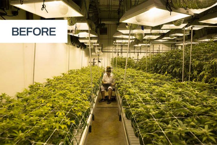 Traditional shelving for cannabis growing companies