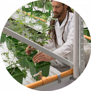 Employees have easy access to plants using the GROW system.