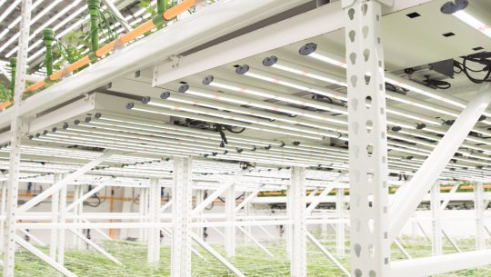 Increase yields with two level shelving
