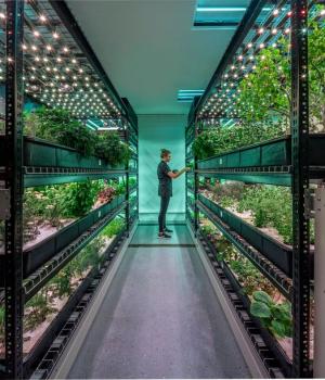 Increasing growing capacity with shelving