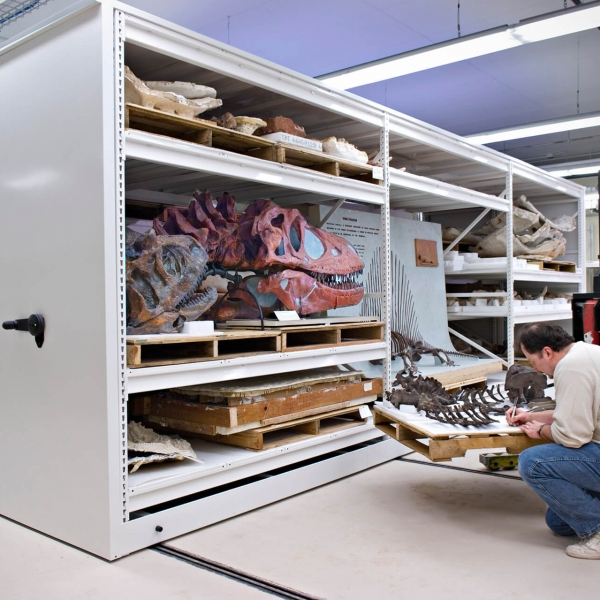 oversized fossils stored on compact mobile storage system